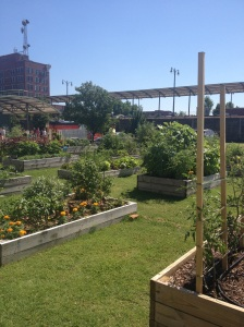 These are small flower bed plots so even downtown residents can grow their own herbs and vegetables.