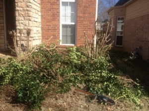 "I did get this monstrosity of a bush cut down and back under control but it wasn't on my initial ""to do"" list."